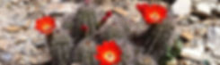 Desert Image Flora.jpg