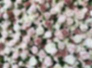 Screen Shot 2020-01-10 at 16.49.58.png
