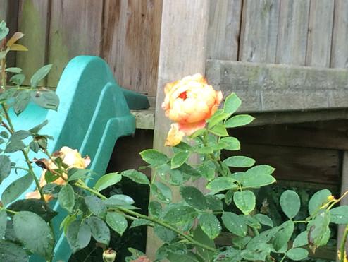 Jardin Spring to Life