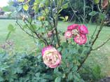Jardin Spring to Life Hélécine