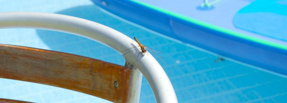 dragonflyandsup.JPG