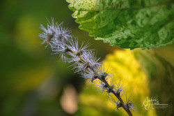 Floweres (2 of 2)