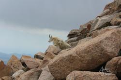 Colorado_Mount St. Evens (2 of 2)