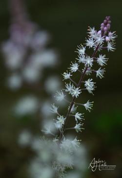 Flowers (2 of 5)-2