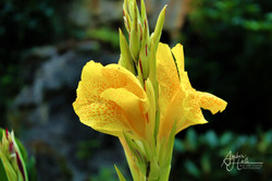 Flowers (5 of 5)