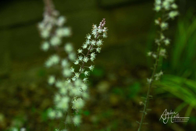 Flowers (1 of 5)-2