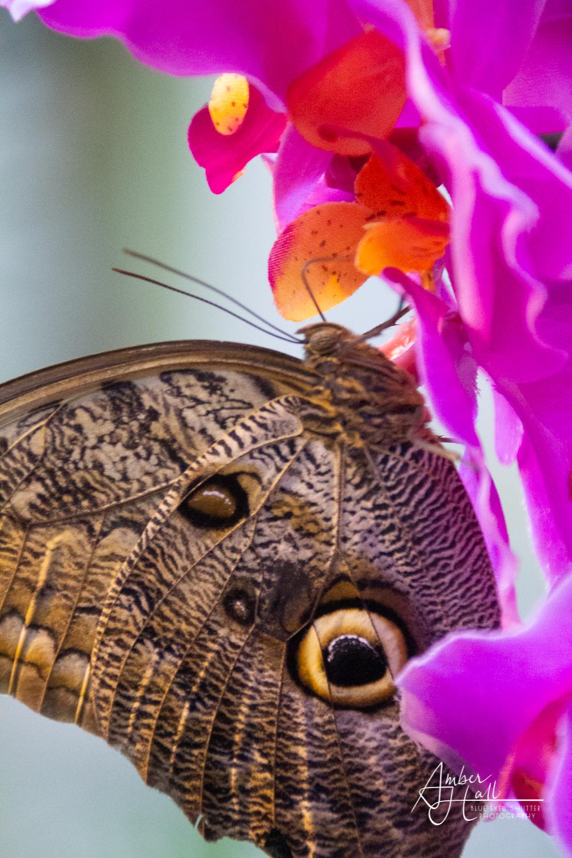 Butterflies_Austria (4 of 6)