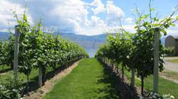 Mission Hill Winery, Kelowna BC