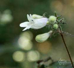 Flowers (3 of 5)-2