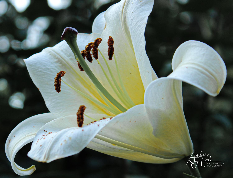 Flowers (4 of 5)