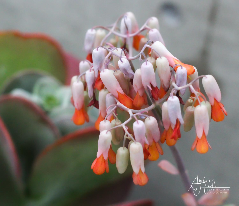 Flowers (2 of 7)