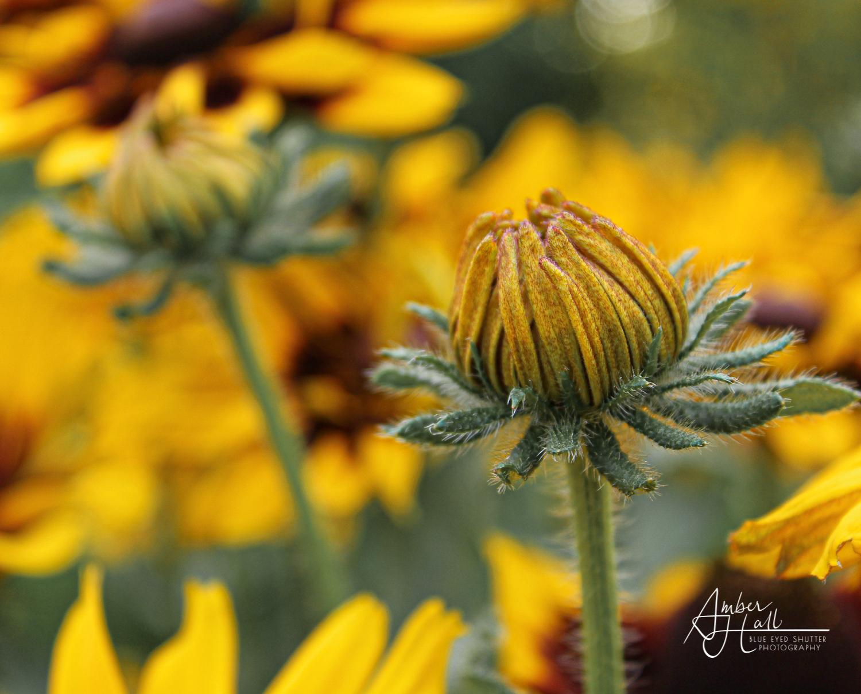 Flowers (3 of 5)