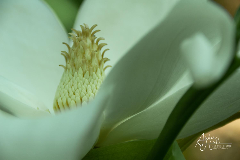 Flowers (5 of 5)-2