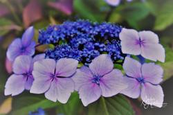 Flowers (1 of 5)