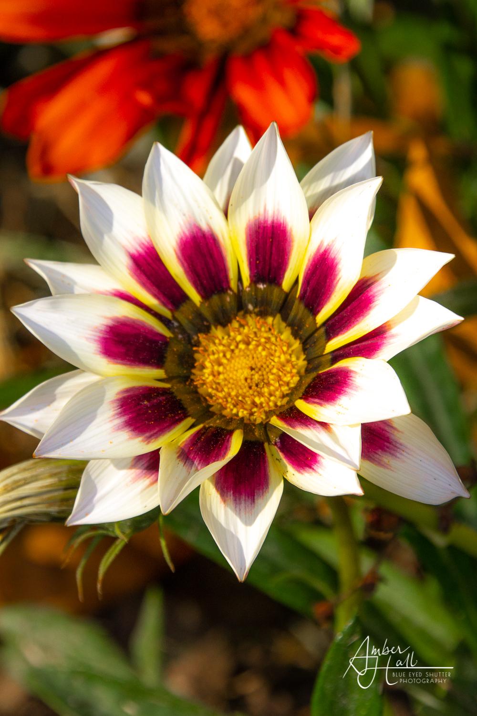 Floweres (1 of 2)