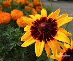 Flowers (2 of 5)