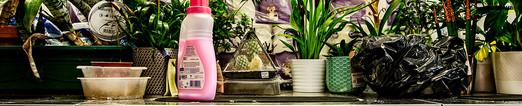 Plants on washing machine.jpg