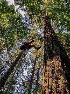 TreeHuggers_Still_01.jpg