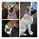 Thumbnail: Wide Rhinestone Dog collar for Staffie, Bulldog Size M Purple