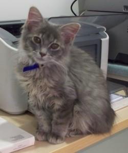 Keisha in her cat collar