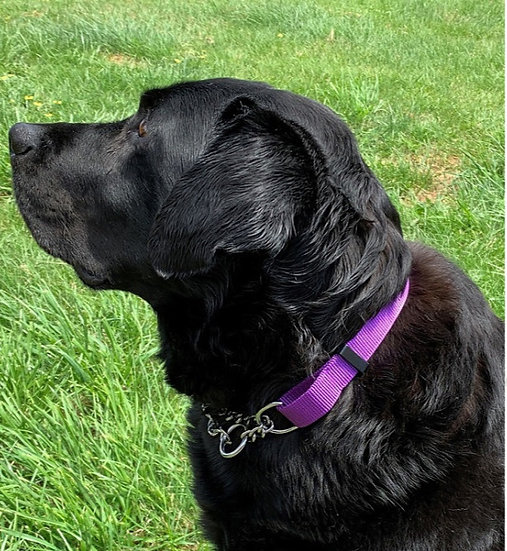 Nylon Martingale Half Check Dog Collar 5 colours