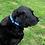 Thumbnail: Nylon Martingale Half Check Dog Collar Dot Pattern 3 colou