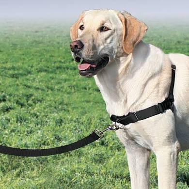 Gentle Leader Easy Walk Dog Harness No Pull blue red black purple
