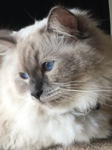 Arlo's Cat Tale