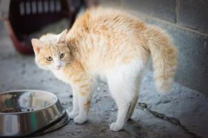 Cat language scaredy cat