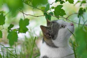 Flea Free cat sniffs the leaves