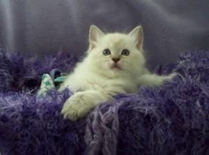 cat language curious kitten