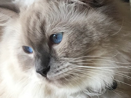 Cat Tales – Sunday Showcase – Julie Matthews and Arlo