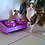 Thumbnail: Ants Off Ant Proof Feeding Table for Dogs Cats Small Pets