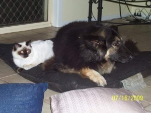 Cat Tale Coco