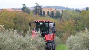 All'Istituto Agrario di Macerata una raccolta innovativa di olive