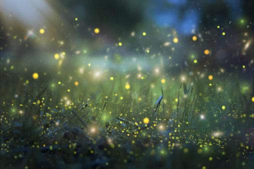 fireflies great smoky mountains.jpeg