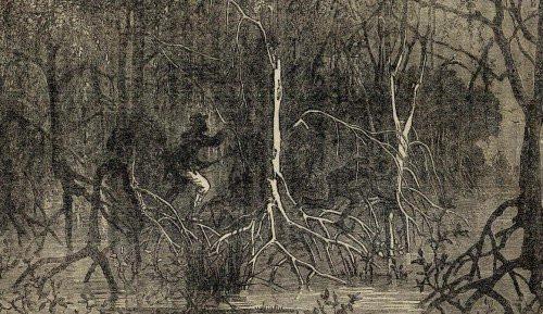 The Selbyville Swamp Monster