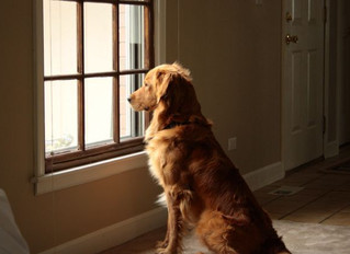 Does Your Dog Really Know When You're Coming Home? What the Science Says!