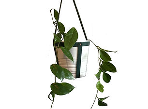 leather-plant-hanger-hoya3.jpg