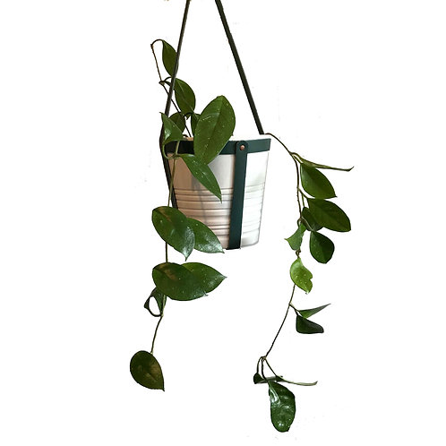 Hanging Planter | Hoya Plant