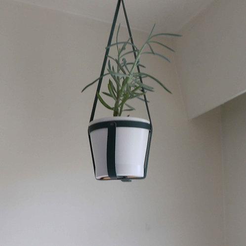 Hanging Planter | Succulent