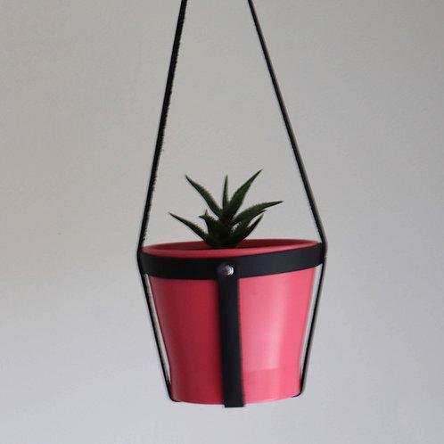 Hanging Planter | Aloe Plant