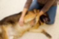 Reiki treatment on dog