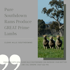 _Pure Southdown Rams Produce GREAT Prime