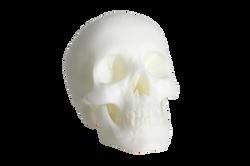 skull_1