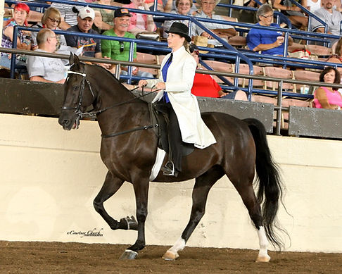 Alena Ouellette showing at the Illinois State Fair