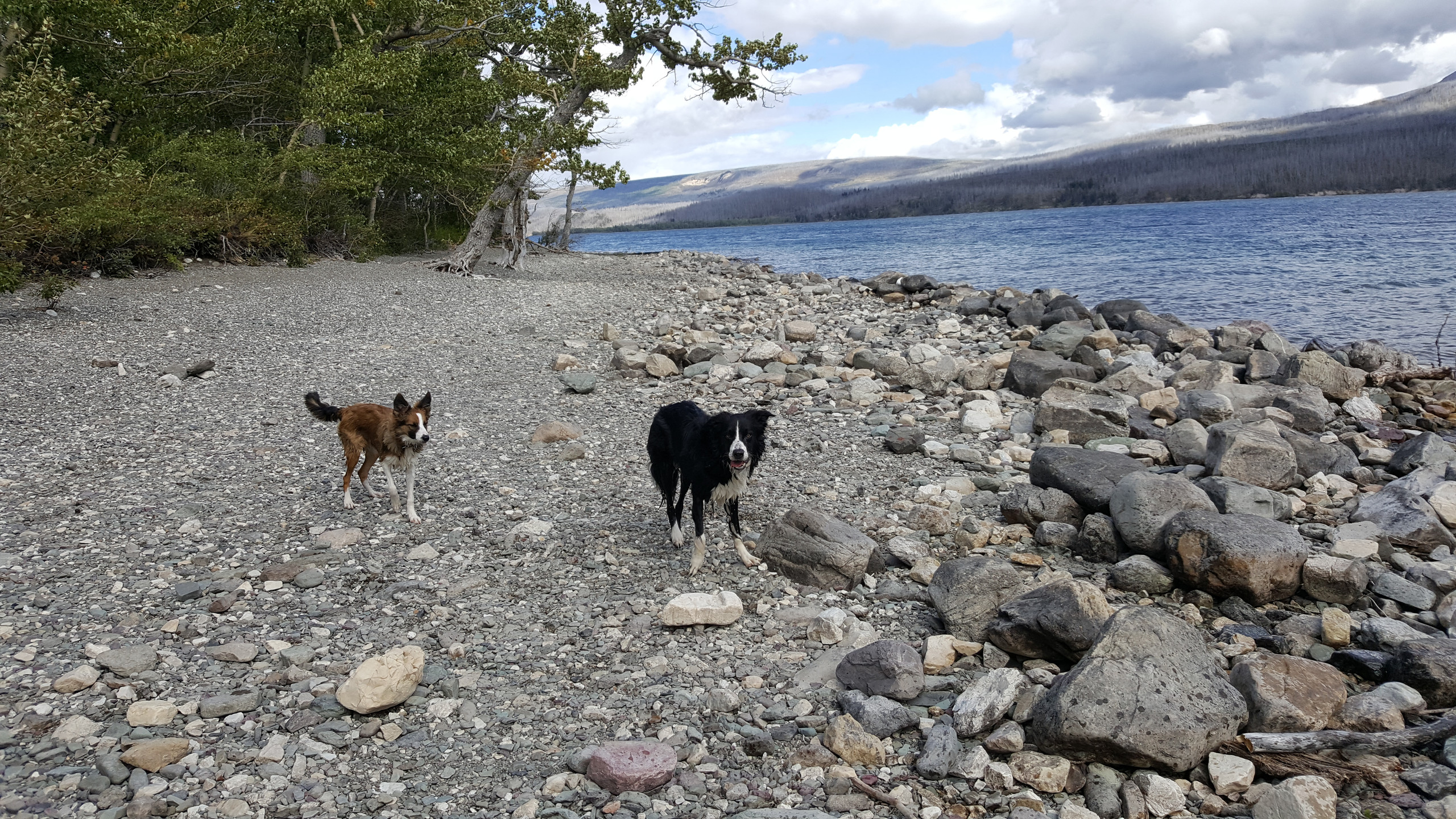Adventure Dogs at St Mary Lake