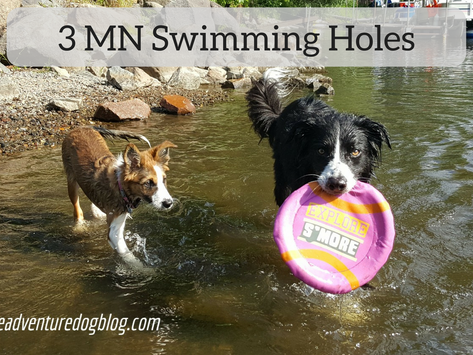 3 Free Swimming Holes for an End of Season Dog Dip
