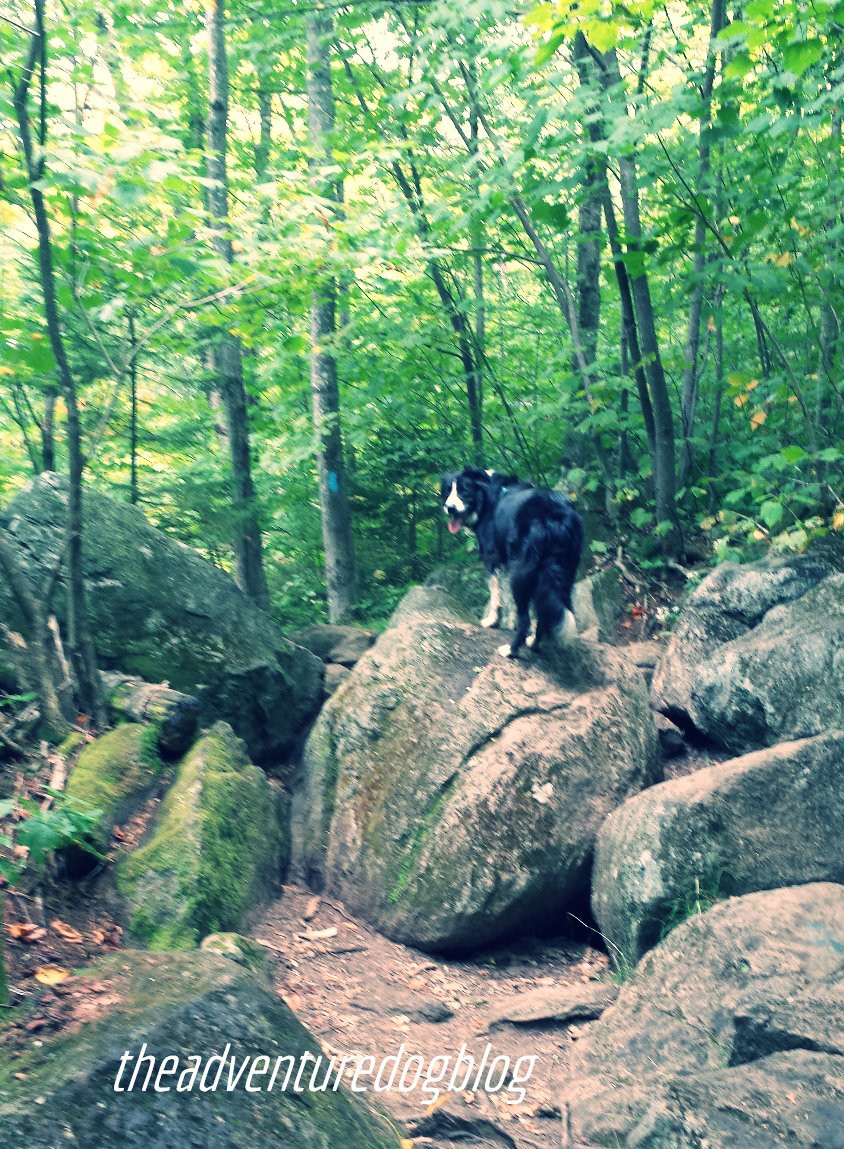 hiking with dogs in Maine