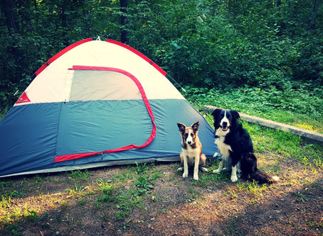 Camping With Dogs: Parks vs Forests